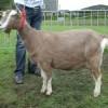keuring-2011-039