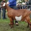 keuring-2011-069