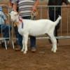 ncw-jub-2012-016
